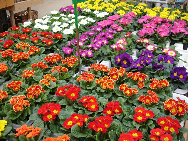 Leuchtende Farbenpracht: Blumen, Pflanzen und Deko-Ideen ...