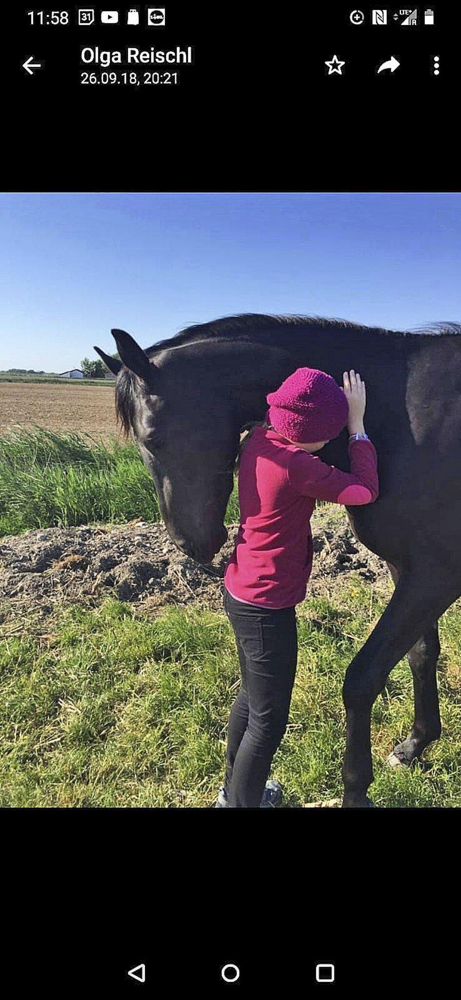 Buxtehuder Sportpferd wird Familienpferd in Bayern                                                                  Ein Happy End für Lea und Beau
