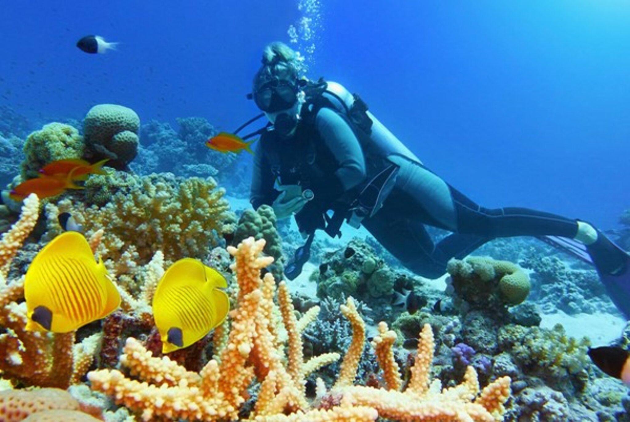 Tauchsafaris in Ägypten: Die Schönheit des Roten Meeres erleben
