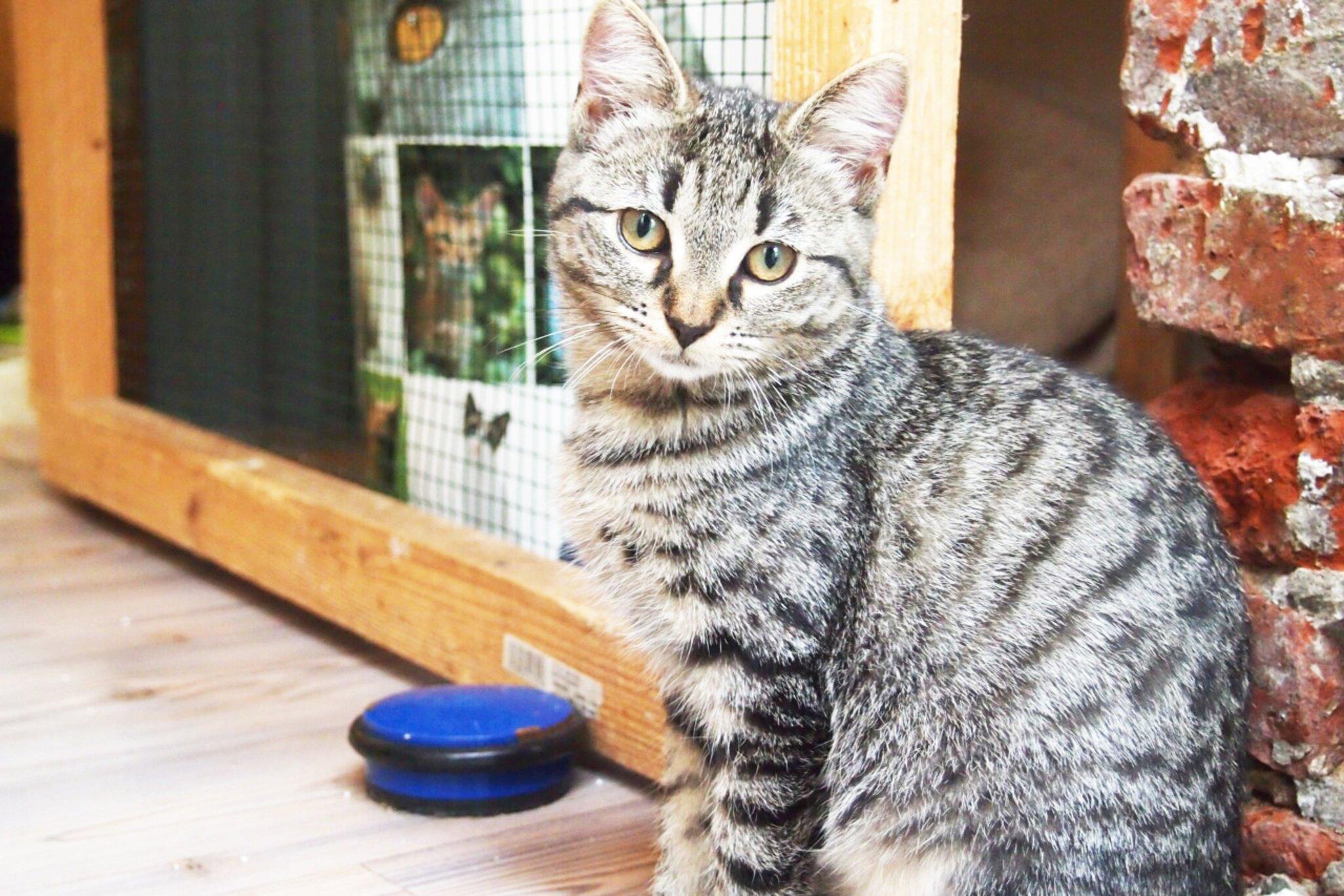Tierschutzverein Buxtehude benötigt Hilfe                                                                  Vierbeiner müssen versorgt werden